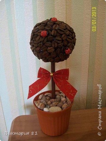 Топиарий  из кофе фото 2