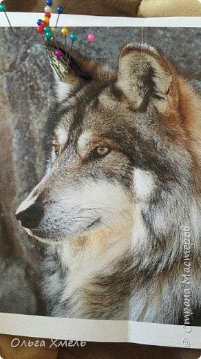 Вот такого волка я решила сделать фото 1