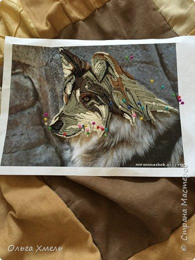 Вот такого волка я решила сделать фото 3