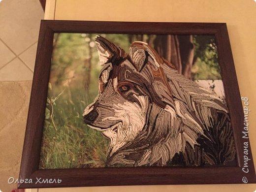 Вот такого волка я решила сделать фото 4