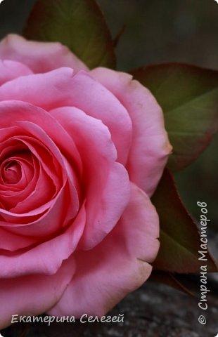 заколка с розой из фоамирана фото 3