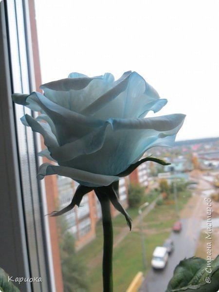 И снова здравствуйте! Наконец я  ее осилила!!!!! Попросили  для подарка сделать розу. Ну все бы ничего - но ее надо было сделать в сине-голубых тонах... Честно говоря - тяжеловато мне это далось. Ну вот что получилось судить вам! фото 4