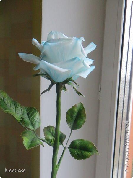 И снова здравствуйте! Наконец я  ее осилила!!!!! Попросили  для подарка сделать розу. Ну все бы ничего - но ее надо было сделать в сине-голубых тонах... Честно говоря - тяжеловато мне это далось. Ну вот что получилось судить вам! фото 3