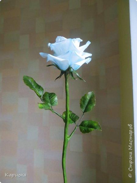 И снова здравствуйте! Наконец я  ее осилила!!!!! Попросили  для подарка сделать розу. Ну все бы ничего - но ее надо было сделать в сине-голубых тонах... Честно говоря - тяжеловато мне это далось. Ну вот что получилось судить вам! фото 2
