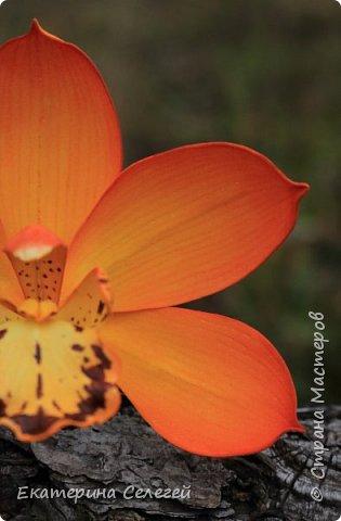 орхидея из фоамирана фото 4