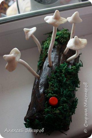 Ночник грибочки,осенняя пора и грибной сезон вдохновили на вот такой ночник фото 2