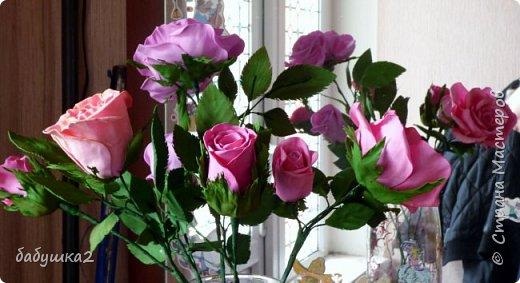 Здравствуйте уважаемые жители СМ. Вот решила вам показать мои цветочки.  фото 1
