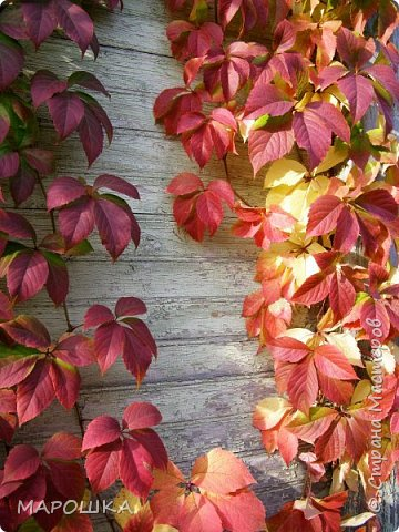 осень, осень.. фото 6