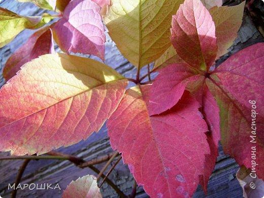 осень, осень.. фото 4