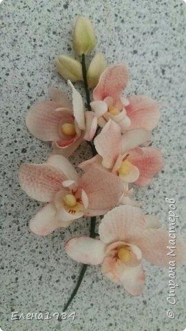 Орхидея из мастики  фото 2