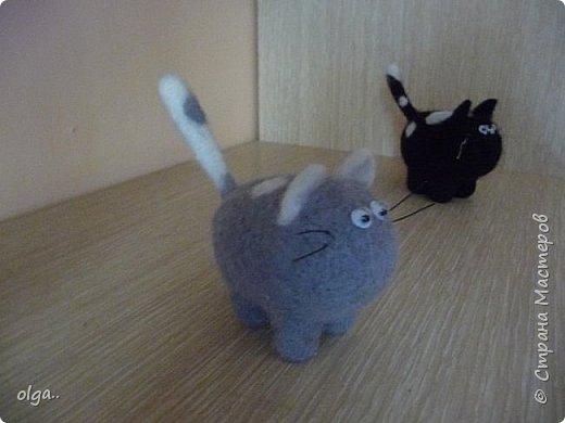 и опять котейки фото 2