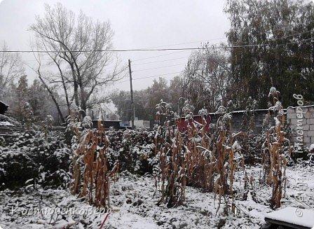 Сегодня, на самом деле, снег пошел второй раз, но теперь он лег хорошим слоем и утро выглядит свежо    и красиво. фото 2