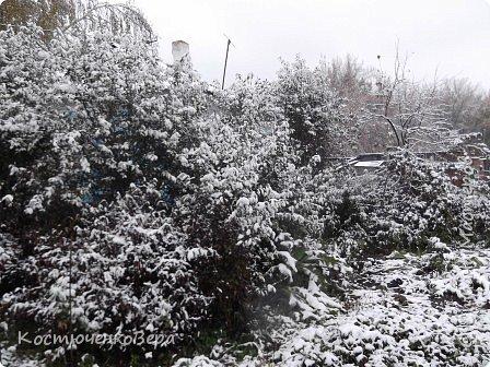 Сегодня, на самом деле, снег пошел второй раз, но теперь он лег хорошим слоем и утро выглядит свежо    и красиво. фото 3