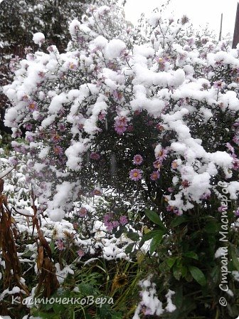 Сегодня, на самом деле, снег пошел второй раз, но теперь он лег хорошим слоем и утро выглядит свежо    и красиво. фото 5