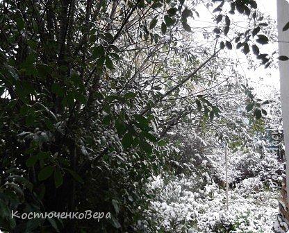 Сегодня, на самом деле, снег пошел второй раз, но теперь он лег хорошим слоем и утро выглядит свежо    и красиво. фото 6