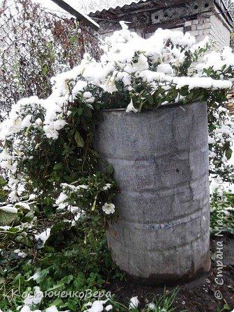 Сегодня, на самом деле, снег пошел второй раз, но теперь он лег хорошим слоем и утро выглядит свежо    и красиво. фото 7