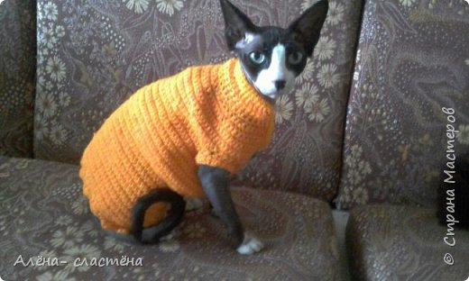 Одежда для кошки фото 1