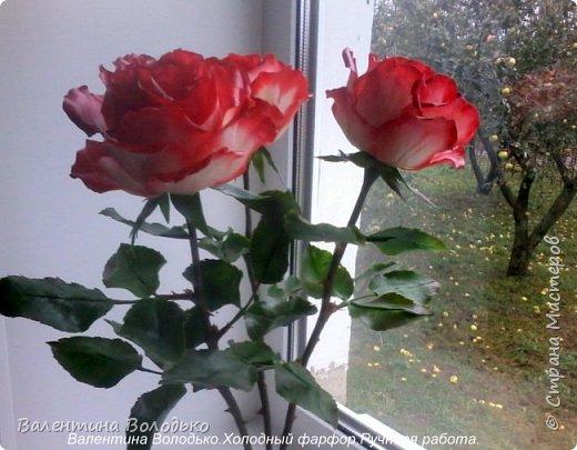 Добрый день мастера и мастерицы!!!!Вот такие розы слепила для своей доченьки.Давно хотела сделать розы такой расцветки,наконец получилось. фото 4