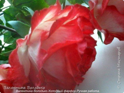 Добрый день мастера и мастерицы!!!!Вот такие розы слепила для своей доченьки.Давно хотела сделать розы такой расцветки,наконец получилось. фото 3