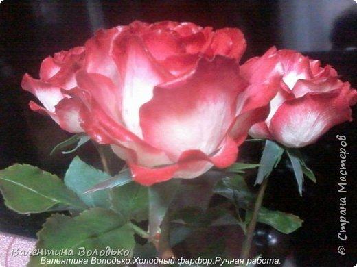 Добрый день мастера и мастерицы!!!!Вот такие розы слепила для своей доченьки.Давно хотела сделать розы такой расцветки,наконец получилось. фото 2