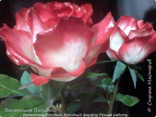 Добрый день мастера и мастерицы!!!!Вот такие розы слепила для своей доченьки.Давно хотела сделать розы такой расцветки,наконец получилось. фото 5