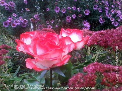 Добрый день мастера и мастерицы!!!!Вот такие розы слепила для своей доченьки.Давно хотела сделать розы такой расцветки,наконец получилось. фото 7