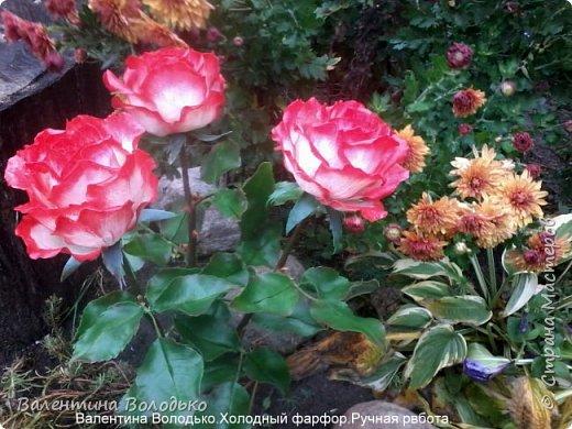 Добрый день мастера и мастерицы!!!!Вот такие розы слепила для своей доченьки.Давно хотела сделать розы такой расцветки,наконец получилось. фото 8