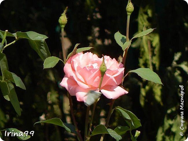 Есть в каждом Божьем дне своя краса: И в солнечном, и в сером, и в дождливом. И даже в самом мрачном и унылом - Душой увидеть можно чудеса... Честное слово...не знаю чьи это строки....просто нашла в Инете....простите уж! Но как мне хочется чтобы все увидели всю красоту природы...забыли обо всех неурядицах нашей сложной жизни...и глазами и душой... Начну со своего любимого-заката. Согласитесь, что  над рекой закаты красивее , чем на море. фото 35
