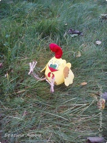 Всем жителям замечательной страны огромный привет.сегодня я к вам с малышкой)))петушком ,но еще цыпленком))))автор такого цыпленка замечательная мастерица Л.Набиуллина ,но мк у нее платные .и вот увидела я такого петушка вот тут http://stranamasterov.ru/node/1049448 за что спасибо девочкам за вдохновение)))))))))))))))) покупать мк я не имею возможности )))а вот самой попробовать посмотрев просто на картинку мне захотелось))))и вот что у меня получилось))очень быстро и без проблем)))чего и вам желаю! фото 7