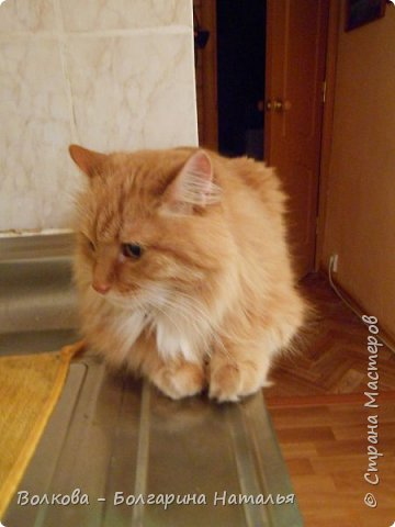 """Всем привет! И зимой, и летом....и осенью кото-блокнотики у меня всегда в особом почёте:)  В работе использовала 2 клиновых листа +  штампик """"Кошка"""" от магазина """"Арт-Кладовая"""".  фото 25"""