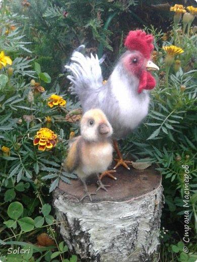 После долгого летнего перерыва , а последняя работа у меня была сделана на майские праздники, началось подготовка подарков к НГ.С начала появился цыпленок а затем уже петушок. фото 6