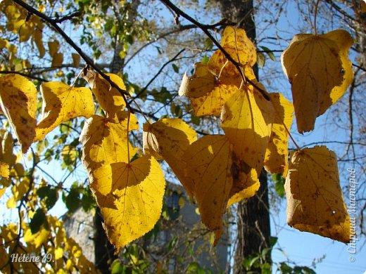 """""""Осень. Сказочный чертог,  Всем открытый для обзора.  Просеки лесных дорог,  Заглядевшихся в озера.    фото 2"""