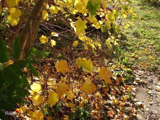 """""""Осень. Сказочный чертог,  Всем открытый для обзора.  Просеки лесных дорог,  Заглядевшихся в озера.    фото 5"""