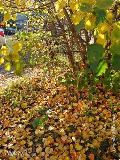 """""""Осень. Сказочный чертог,  Всем открытый для обзора.  Просеки лесных дорог,  Заглядевшихся в озера.    фото 9"""