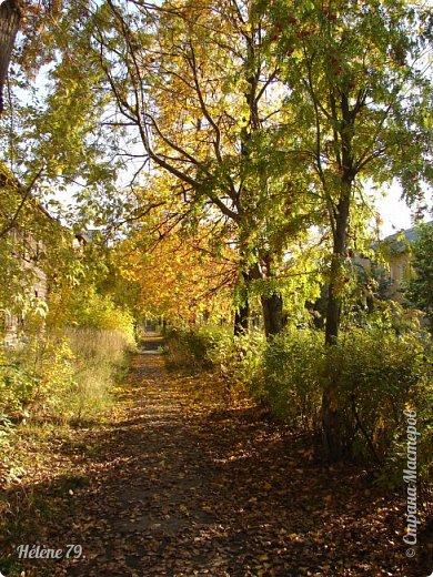 """""""Осень. Сказочный чертог,  Всем открытый для обзора.  Просеки лесных дорог,  Заглядевшихся в озера.    фото 16"""