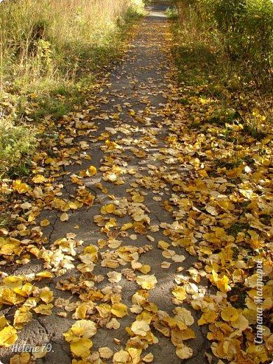 """""""Осень. Сказочный чертог,  Всем открытый для обзора.  Просеки лесных дорог,  Заглядевшихся в озера.    фото 17"""