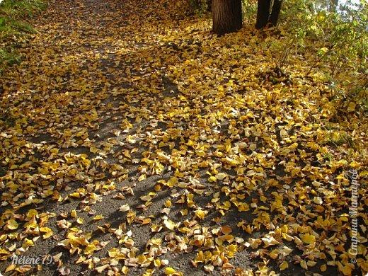 """""""Осень. Сказочный чертог,  Всем открытый для обзора.  Просеки лесных дорог,  Заглядевшихся в озера.    фото 22"""