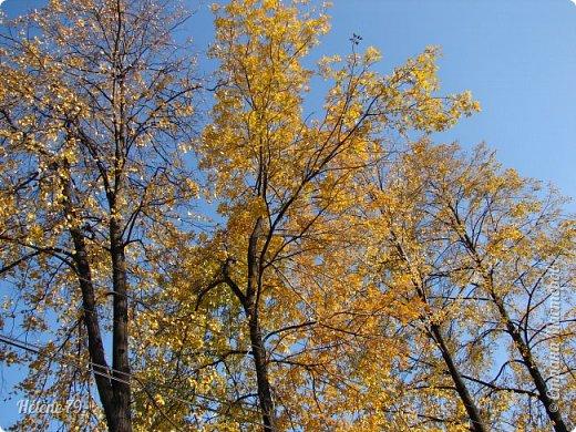 """""""Осень. Сказочный чертог,  Всем открытый для обзора.  Просеки лесных дорог,  Заглядевшихся в озера.    фото 23"""