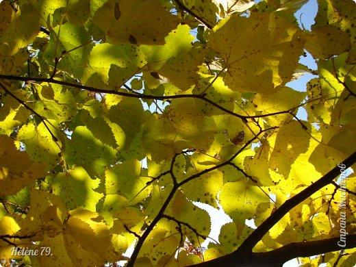"""""""Осень. Сказочный чертог,  Всем открытый для обзора.  Просеки лесных дорог,  Заглядевшихся в озера.    фото 25"""