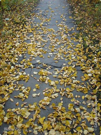 """""""Осень. Сказочный чертог,  Всем открытый для обзора.  Просеки лесных дорог,  Заглядевшихся в озера.    фото 27"""
