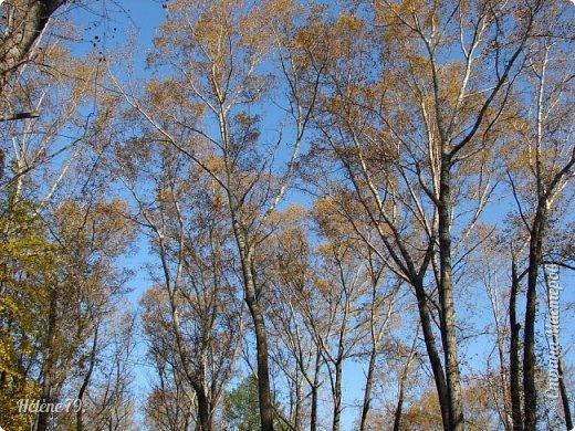 """""""Осень. Сказочный чертог,  Всем открытый для обзора.  Просеки лесных дорог,  Заглядевшихся в озера.    фото 33"""