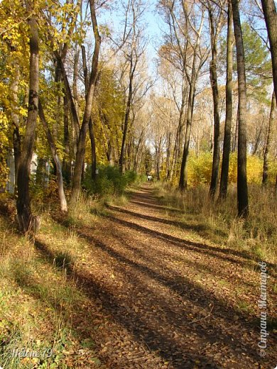 """""""Осень. Сказочный чертог,  Всем открытый для обзора.  Просеки лесных дорог,  Заглядевшихся в озера.    фото 34"""