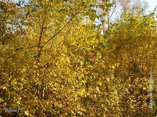 """""""Осень. Сказочный чертог,  Всем открытый для обзора.  Просеки лесных дорог,  Заглядевшихся в озера.    фото 35"""
