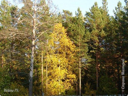 """""""Осень. Сказочный чертог,  Всем открытый для обзора.  Просеки лесных дорог,  Заглядевшихся в озера.    фото 39"""