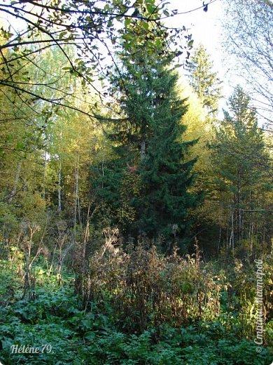 """""""Осень. Сказочный чертог,  Всем открытый для обзора.  Просеки лесных дорог,  Заглядевшихся в озера.    фото 41"""
