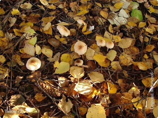 """""""Осень. Сказочный чертог,  Всем открытый для обзора.  Просеки лесных дорог,  Заглядевшихся в озера.    фото 44"""