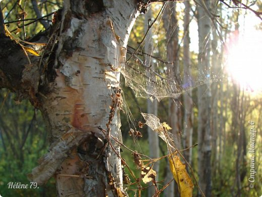 """""""Осень. Сказочный чертог,  Всем открытый для обзора.  Просеки лесных дорог,  Заглядевшихся в озера.    фото 48"""