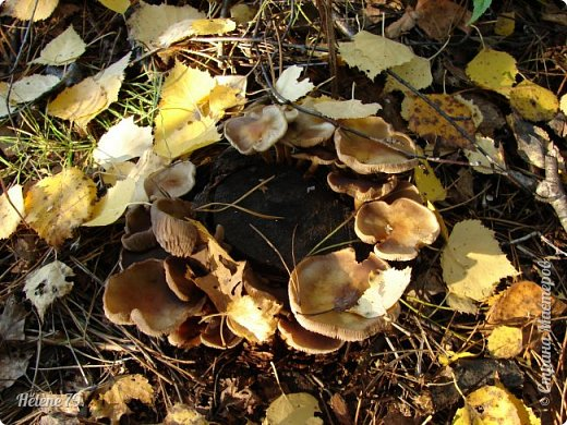 """""""Осень. Сказочный чертог,  Всем открытый для обзора.  Просеки лесных дорог,  Заглядевшихся в озера.    фото 47"""