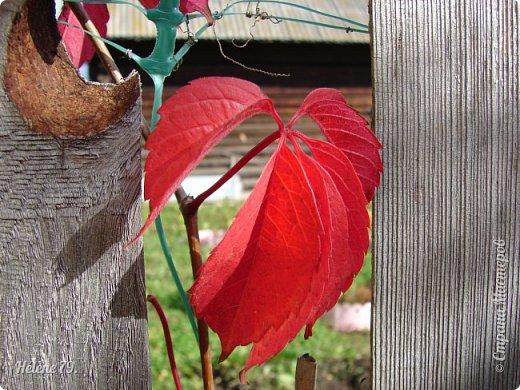 """""""Осень. Сказочный чертог,  Всем открытый для обзора.  Просеки лесных дорог,  Заглядевшихся в озера.    фото 52"""
