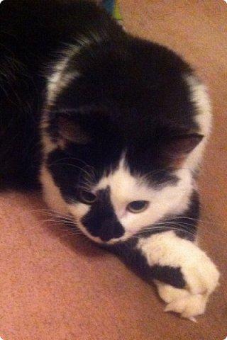 Всем привет!!!! Знакомьтесь, мои кошки. Тося, Степа, Вася, Тиша. фото 34